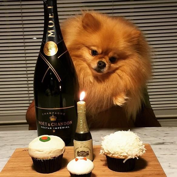perros ricos de instagram