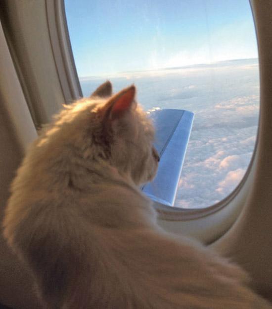 choupette-en-el-avion